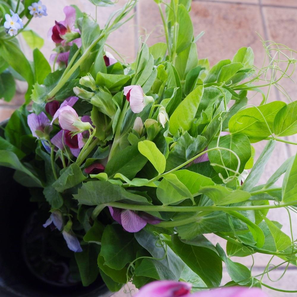 オークリーフ(今日のお店の花たち)_f0049672_16300541.jpg
