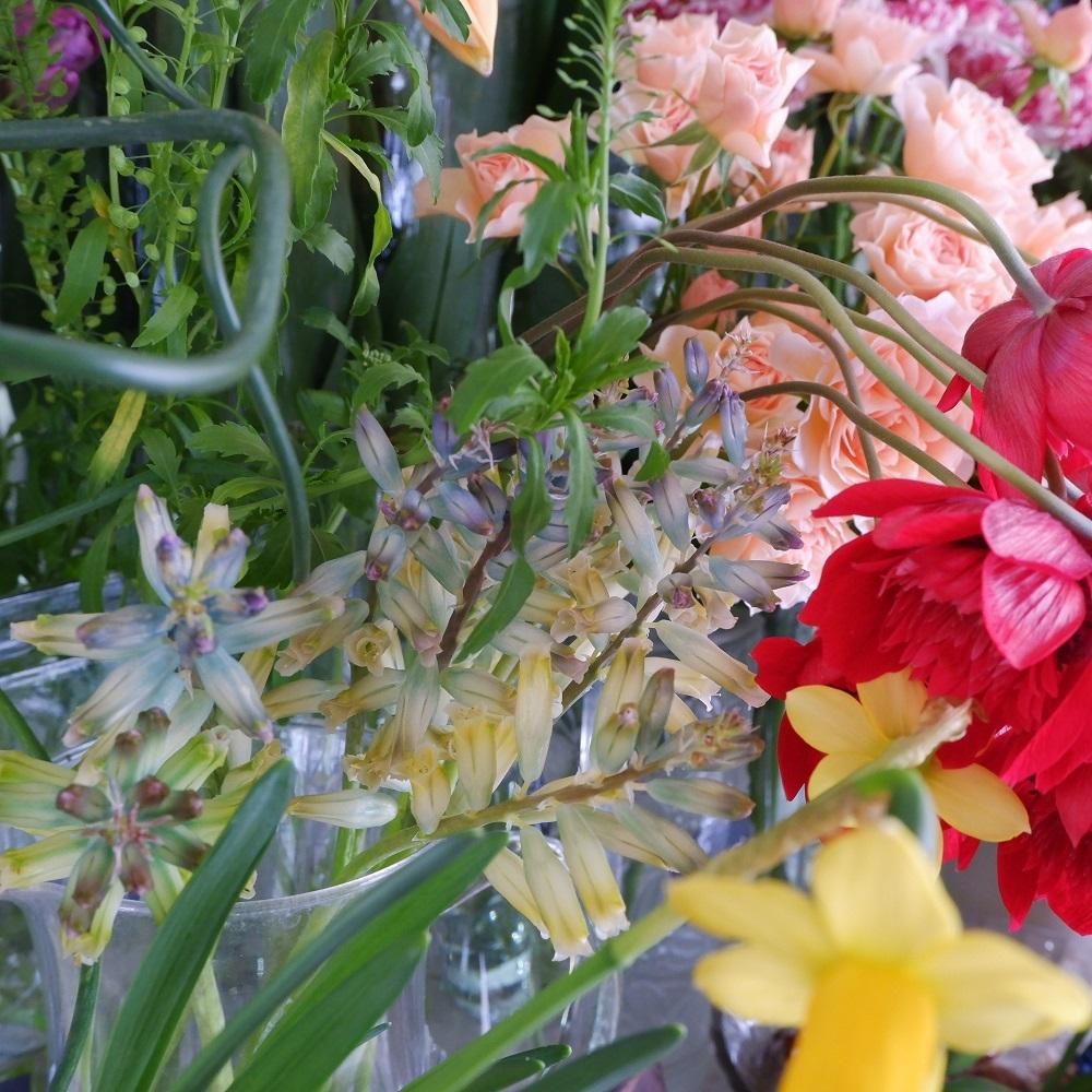 オークリーフ(今日のお店の花たち)_f0049672_16301134.jpg
