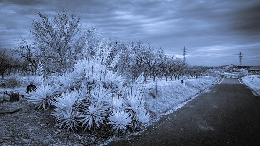 むっつりとした冬景色_d0353489_17145077.jpg