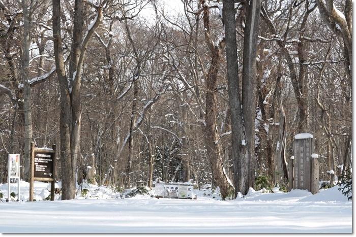 野幌森林公園('20・1・22)_f0146493_23245178.jpg