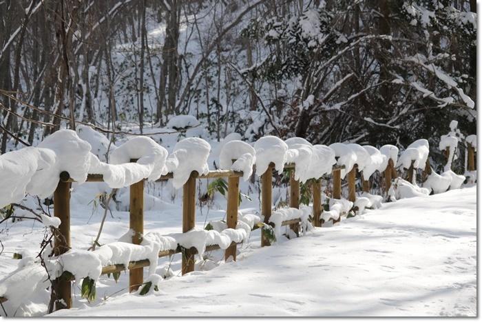 野幌森林公園('20・1・22)_f0146493_23265213.jpg