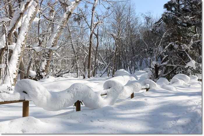野幌森林公園('20・1・22)_f0146493_23270185.jpg