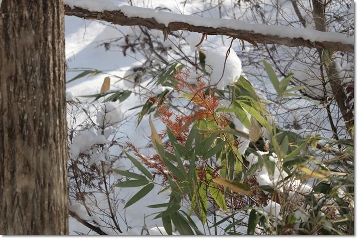 野幌森林公園('20・1・22)_f0146493_23271800.jpg
