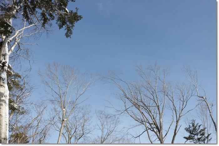 野幌森林公園('20・1・22)_f0146493_23272529.jpg
