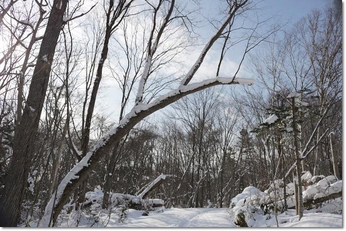 野幌森林公園('20・1・22)_f0146493_23273105.jpg