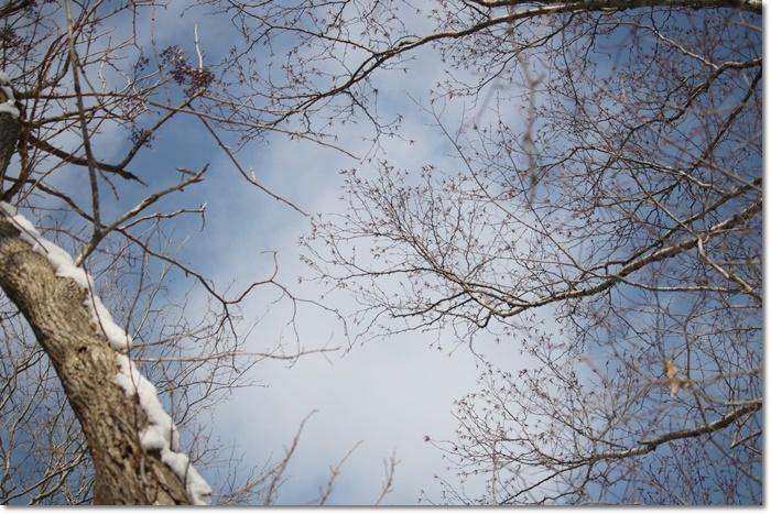 野幌森林公園('20・1・22)_f0146493_23282560.jpg