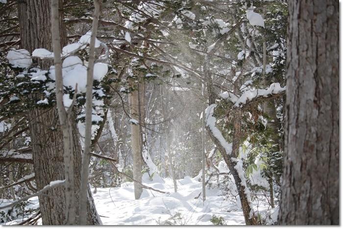 野幌森林公園('20・1・22)_f0146493_23283102.jpg