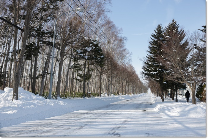 野幌森林公園('20・1・22)_f0146493_23290431.jpg
