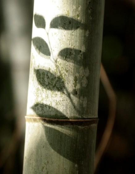 竹林で チョイパチ_d0140806_939302.jpg