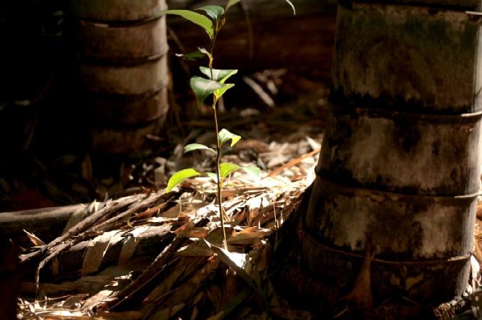 竹林で チョイパチ_d0140806_945957.jpg