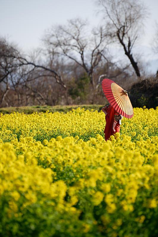 5LinksでGo~! 寒咲き菜の花@守山 なぎさ公園_f0032011_19105026.jpg