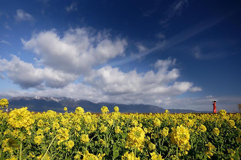 5LinksでGo~! 寒咲き菜の花@守山 なぎさ公園_f0032011_19105062.jpg