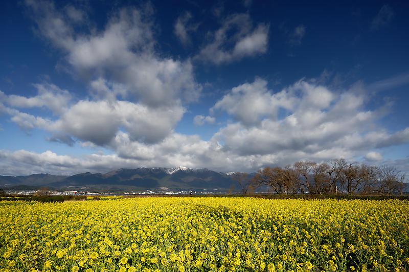 5LinksでGo~! 寒咲き菜の花@守山 なぎさ公園_f0032011_19105084.jpg
