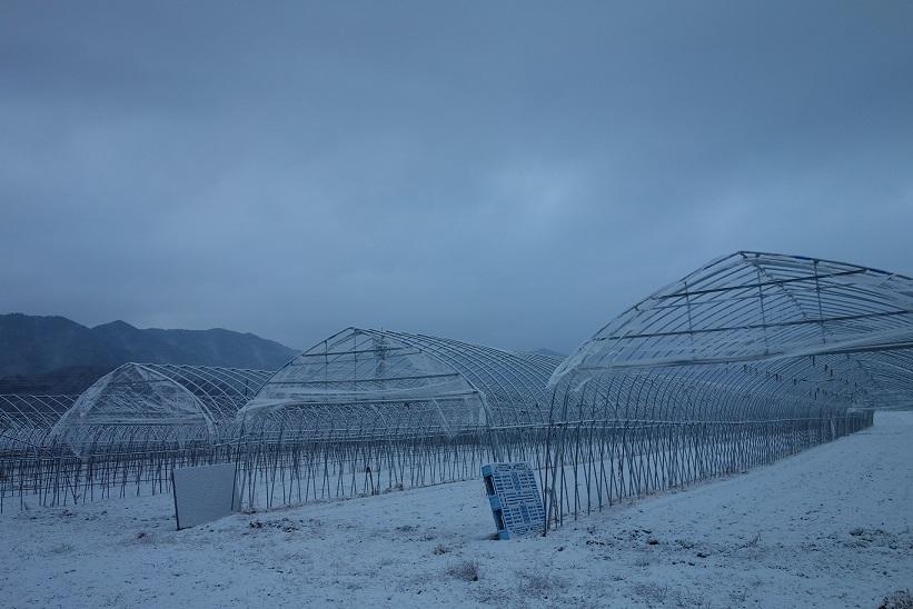 雪の少ない冬_e0112417_16074590.jpg