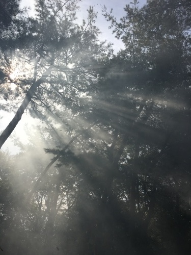弥生時代の覆い焼き/11月10日のワークショップ_e0295926_14133139.jpg