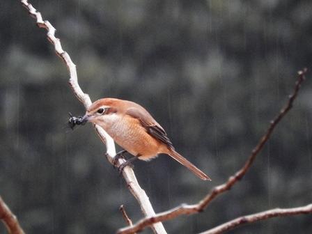 鳥たちの楽園_a0123836_11114755.jpg