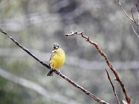 鳥たちの楽園_a0123836_11115184.jpg