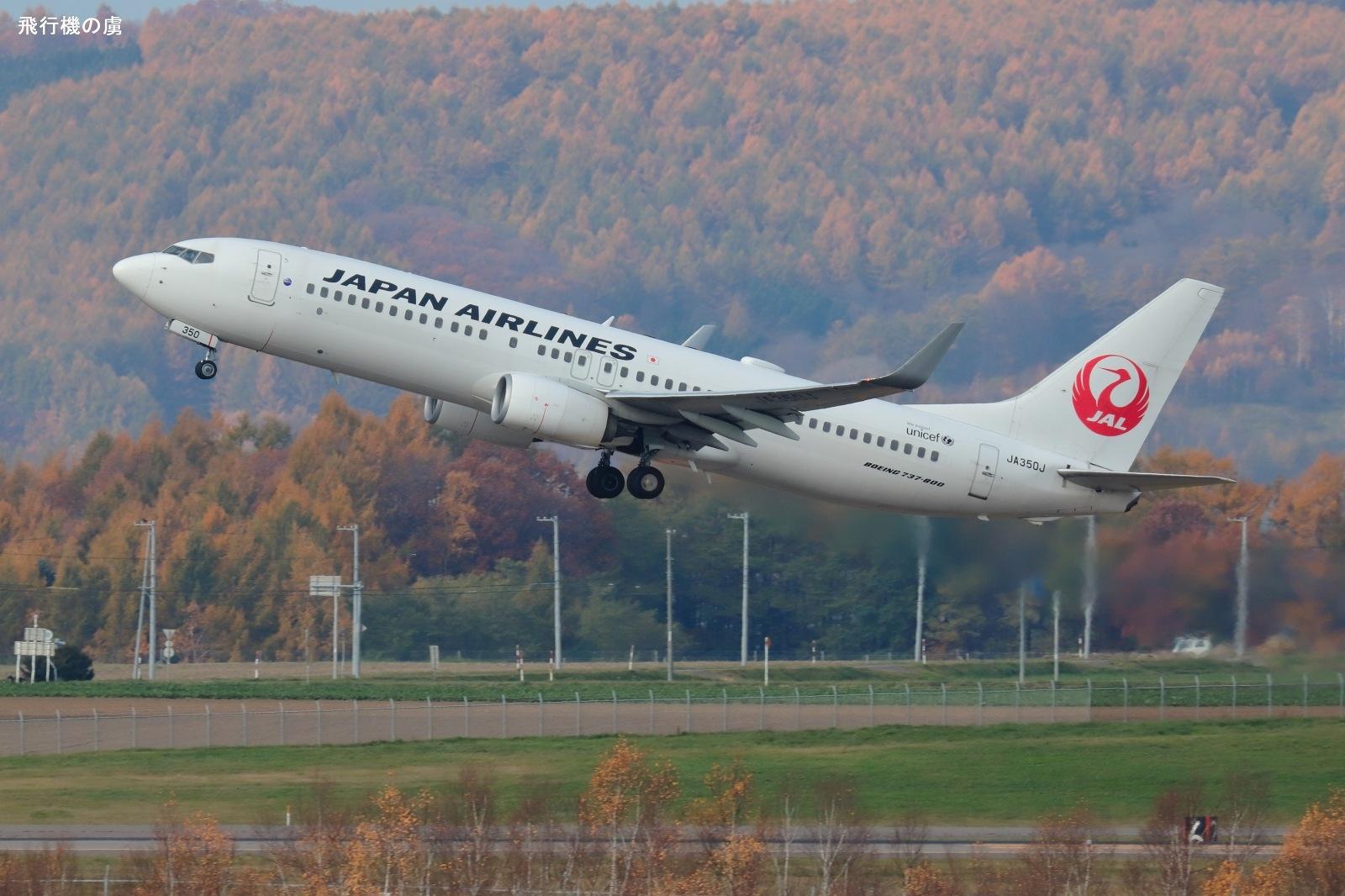 小さな 350  B737  日本航空(JL)_b0313338_11513476.jpg