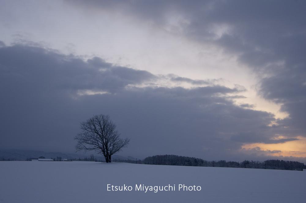 ようやく雪景色_f0152939_17081545.jpg