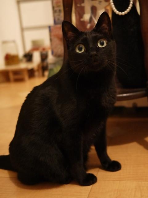 お誕生日猫 のぇる永遠の5歳猫。_a0143140_21565788.jpg