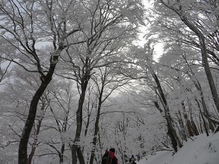 今年初のスノーシューで樹氷の森を堪能!!【台高・明神平界隈】1/19 ★MSRライトニングアッセントを加工修理する_d0387443_09445591.jpg