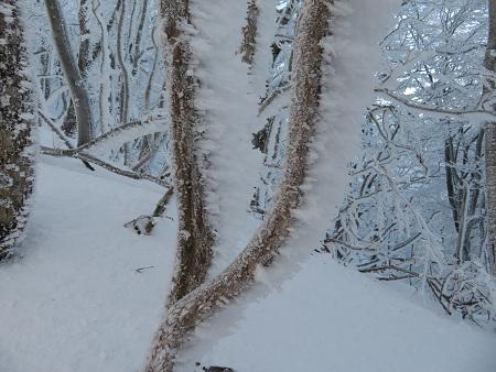 今年初のスノーシューで樹氷の森を堪能!!【台高・明神平界隈】1/19 ★MSRライトニングアッセントを加工修理する_d0387443_09445646.jpg