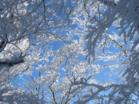 今年初のスノーシューで樹氷の森を堪能!!【台高・明神平界隈】1/19 ★MSRライトニングアッセントを加工修理する_d0387443_09454097.jpg