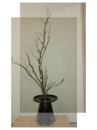 暖冬で野菜が育ちすぎ。。_b0189573_15104123.jpg