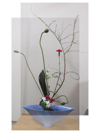 暖冬で野菜が育ちすぎ。。_b0189573_15105313.jpg