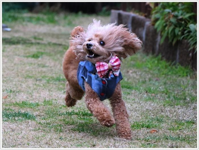 今日は気温高め、雨も降らずで、さくらと大はたくさん外で遊べたね~(v´∀'*) イエーイ♪_b0175688_20132395.jpg
