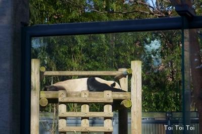 上野動物園 パンダ_e0399307_00343030.jpg