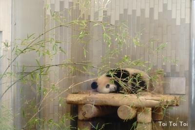 上野動物園 パンダ_e0399307_00343073.jpg