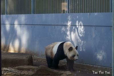 上野動物園 パンダ_e0399307_00343075.jpg