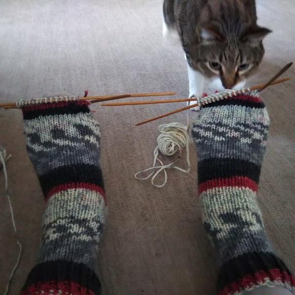 毛糸の靴下、ちゃたろうに見てもらう。_f0316507_08521136.jpg