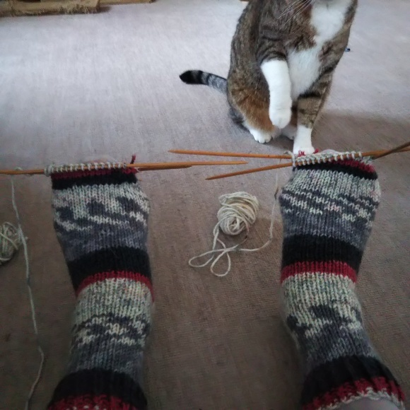 毛糸の靴下、ちゃたろうに見てもらう。_f0316507_08522524.jpg