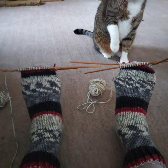 毛糸の靴下、ちゃたろうに見てもらう。_f0316507_08523751.jpg