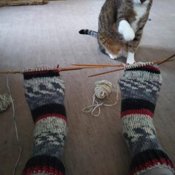 毛糸の靴下、ちゃたろうに見てもらう。_f0316507_08524743.jpg