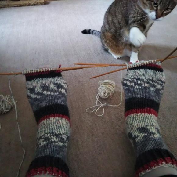 毛糸の靴下、ちゃたろうに見てもらう。_f0316507_08530131.jpg