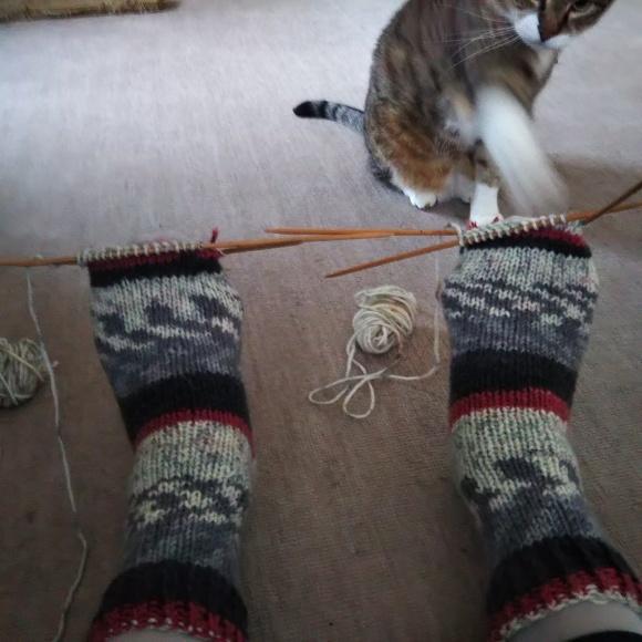 毛糸の靴下、ちゃたろうに見てもらう。_f0316507_08531012.jpg