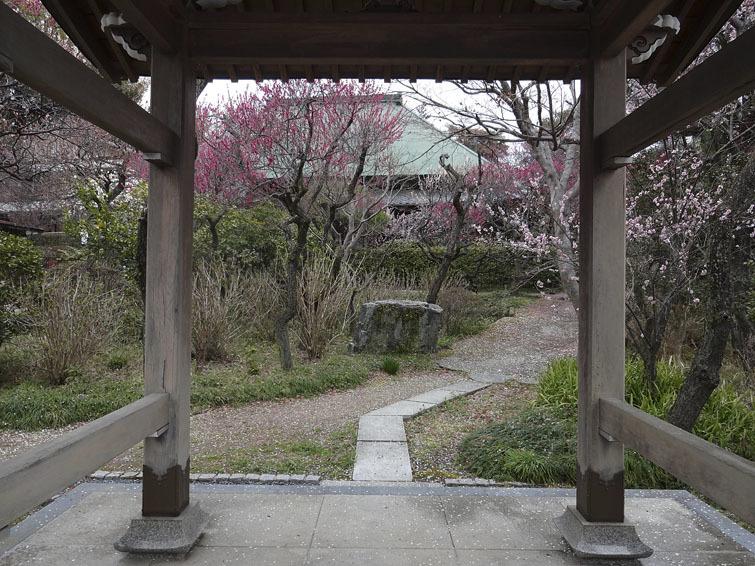 稲城市、妙覚寺(改訂版)_e0367330_17315074.jpg