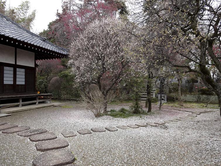 稲城市、妙覚寺(改訂版)_e0367330_17322656.jpg