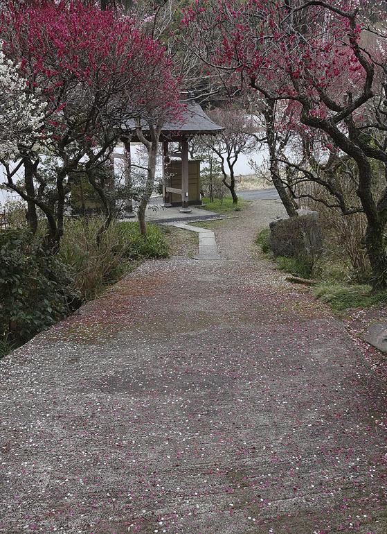 稲城市、妙覚寺(改訂版)_e0367330_17342567.jpg