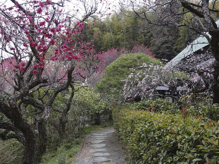 稲城市、妙覚寺(改訂版)_e0367330_17350380.jpg