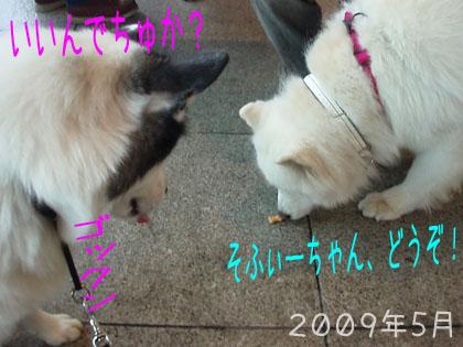 再会プロジェクト・2_c0062832_04205801.jpg