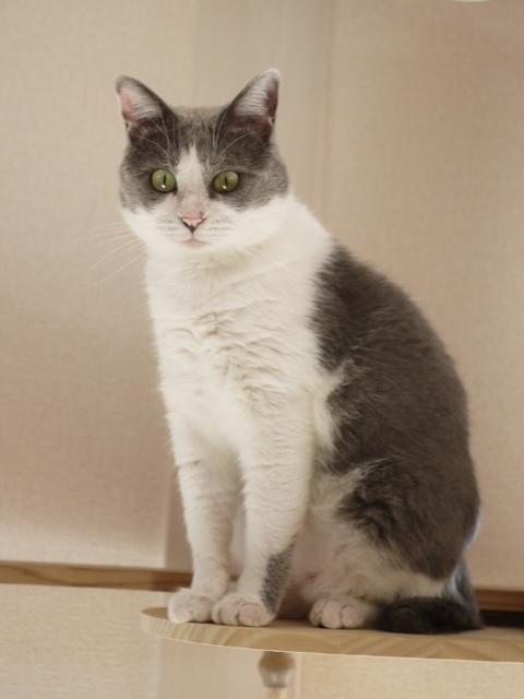 猫のお留守番 赤福くん編。_a0143140_19003372.jpg