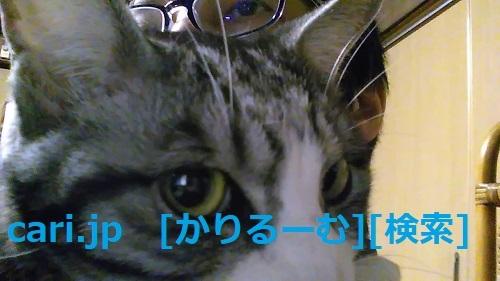 2018年12月28日猫スズ(すず)の写真 cari.jp_a0392441_23201628.jpg