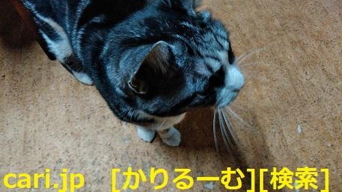 2018年12月24日猫すず(スズ)の写真 cari.jp_a0392441_23363718.jpg