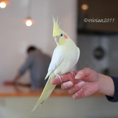 toko(トコー) ~念願のお店でランチ~_e0227942_21375910.jpg