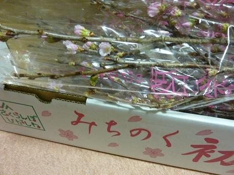 啓翁桜_a0297743_14591854.jpg