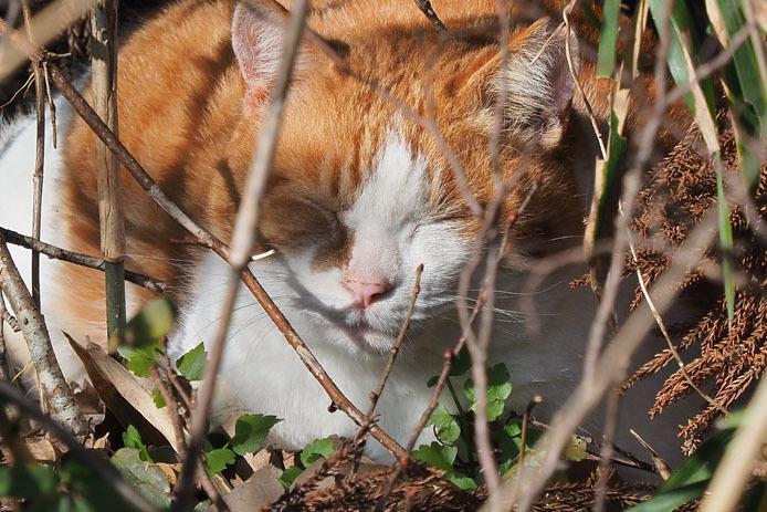 野鳥の森でうたた寝する猫_d0149245_21272217.jpg